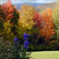 View over the garden during leaf season